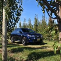 The Gold Standard: 2015 Lexus RX 350 F Sport
